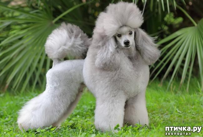 фото 5: Год Собаки 2018: какая порода вам подходит по знаку зодиака
