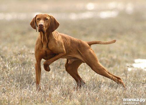 фото 6: Год Собаки 2018: какая порода вам подходит по знаку зодиака
