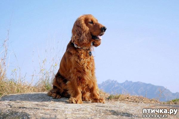 фото 13: Год Собаки 2018: какая порода вам подходит по знаку зодиака