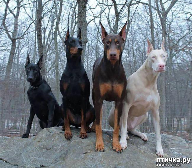 фото 16: Год Собаки 2018: какая порода вам подходит по знаку зодиака