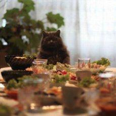 фото: Хозяин ждёт гостей...
