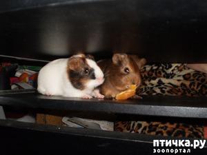 фото: Корица и малыши 2