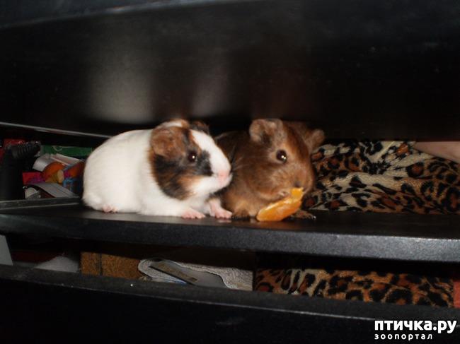 фото 1: Корица и малыши 2