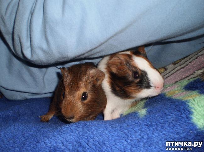 фото 3: Корица и малыши 2