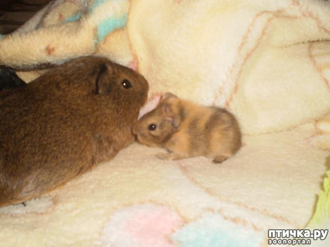 фото 7: Корица и малыши 2