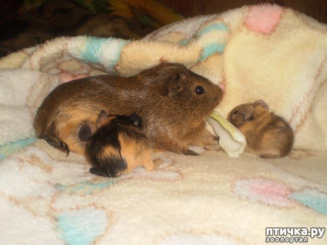 фото 5: Корица и малыши 2