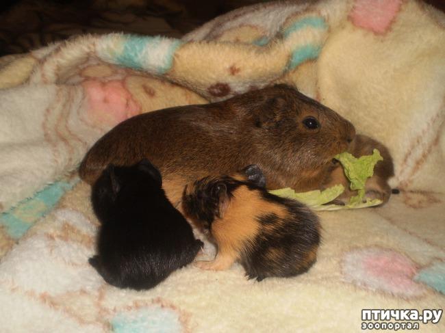 фото 6: Корица и малыши 2