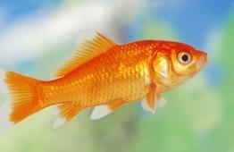 рыбки фото