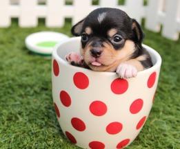 фото животных в блогах владельцев