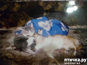 фото: Про дружбу кота и собаки))) Барсик и Альф