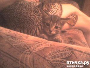 фото: Спасли котят!!!