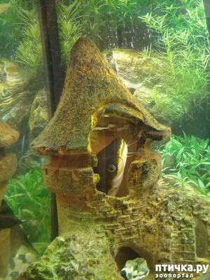 фото: Мой 2-ой аквариум. Обещала)))