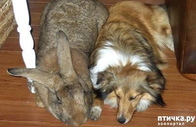 фото 3: Кролики великаны
