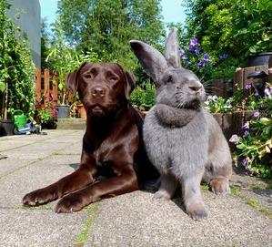фото: Кролики великаны