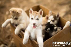 фото: Дрессируем щенка
