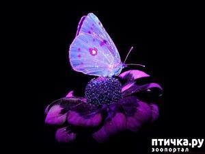 фото: Чем кормят бабочек