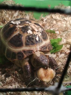 фото: ... и третья наша черепаха.