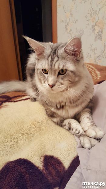 фото: Кастрировать кота или нет?...