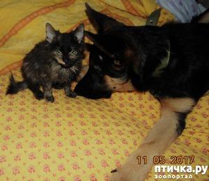 фото 1: Мурочка, новый член семьи