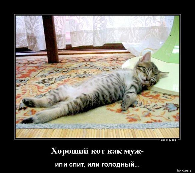 фото 1: Кто лучше - муж или кот??? (юмор)