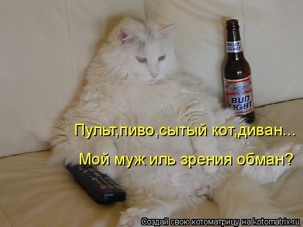 фото 2: Кто лучше - муж или кот??? (юмор)