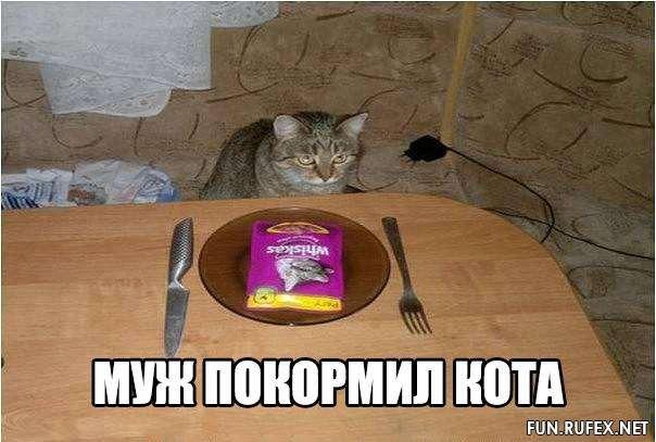 фото 4: Кто лучше - муж или кот??? (юмор)