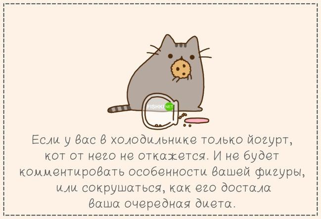 фото 6: Кто лучше - муж или кот??? (юмор)