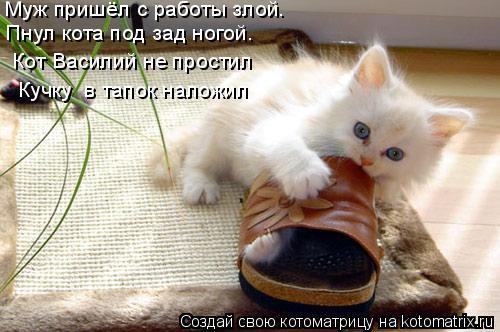 фото 7: Кто лучше - муж или кот??? (юмор)