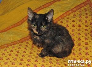 фото: Мурочка, новый член семьи