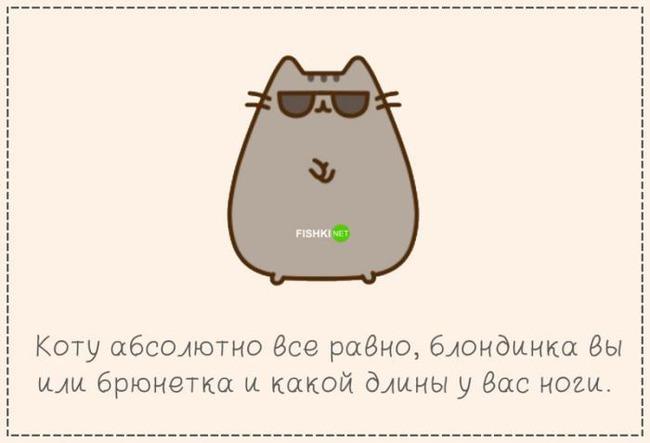 фото 12: Кто лучше - муж или кот??? (юмор)