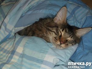 фото: Любимые места кошек для сна???