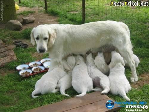 фото 5: Смешные щенки.