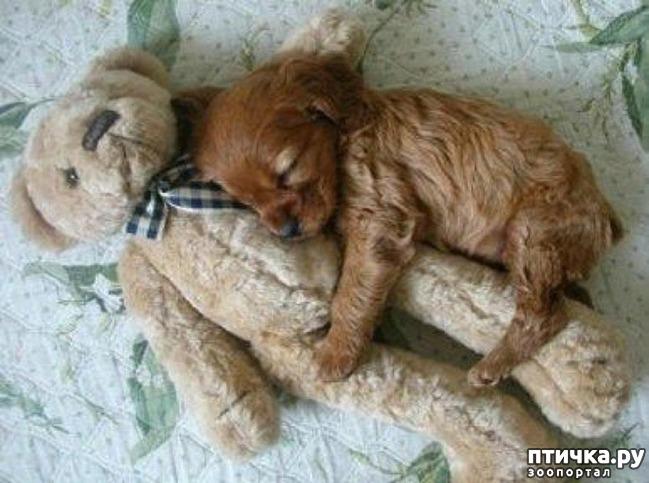 фото 1: Смешные щенки.