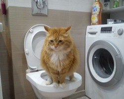 Хэппи-царь на троне