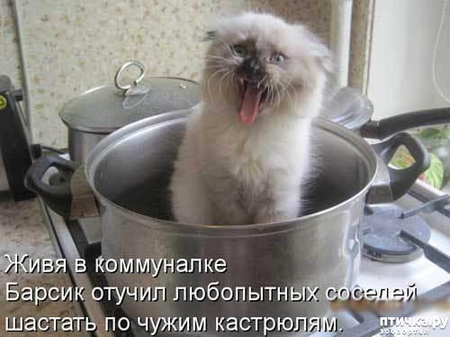 фото 1: Смешные коты 2.