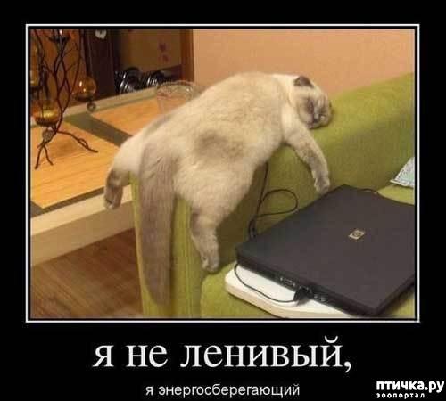 фото 2: Смешные коты 2.