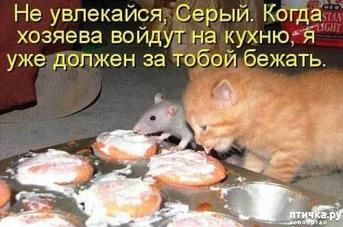 фото 3: Смешные коты 2.