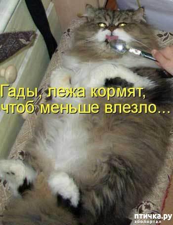 фото 4: Смешные коты 2.