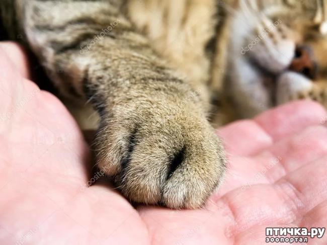 фото 2: Вопрос по поводу удаления когтей у кошек.