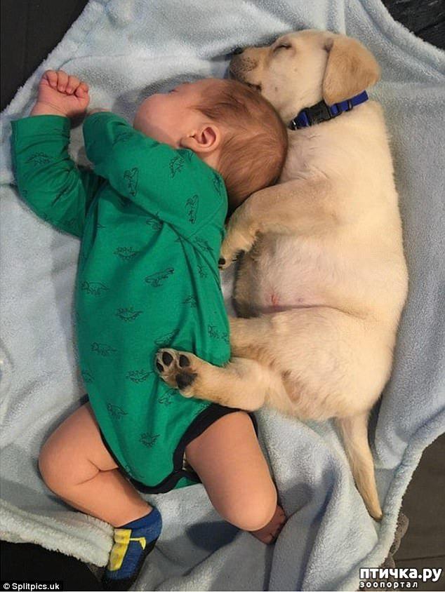 фото 3: Где сон сморил, там и заснули))) какие милые щенки, особенно когда спят)))