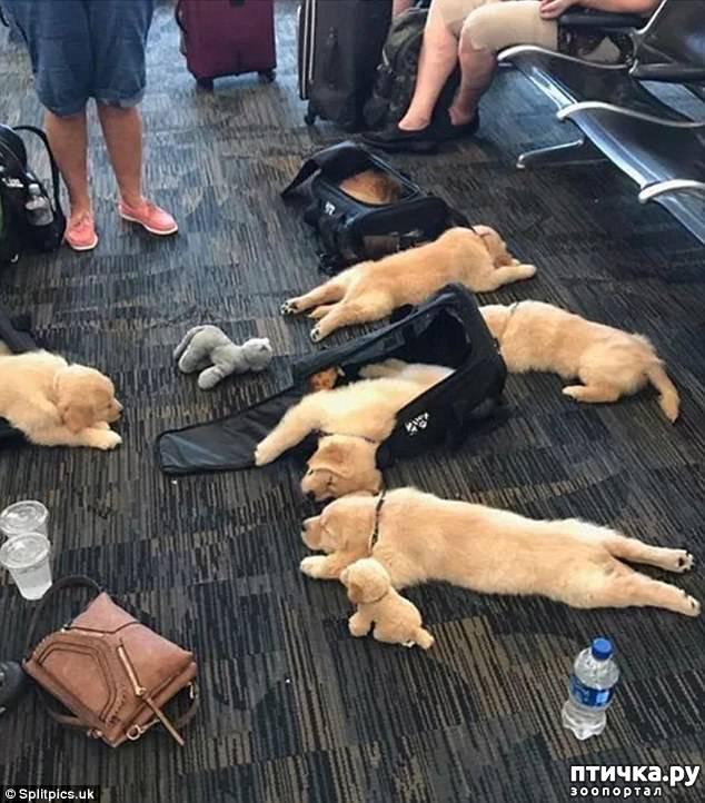 фото 5: Где сон сморил, там и заснули))) какие милые щенки, особенно когда спят)))
