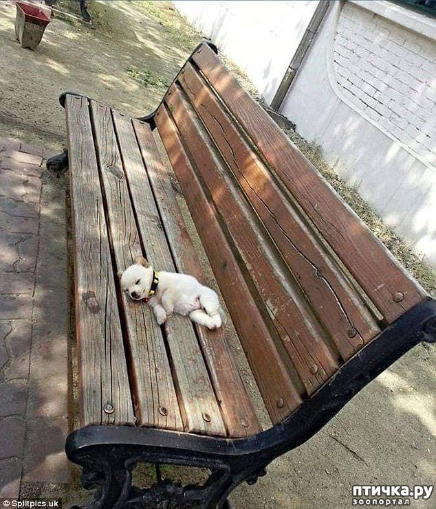 фото 12: Где сон сморил, там и заснули))) какие милые щенки, особенно когда спят)))