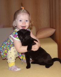 Шотландский вислоухий кот Каспер