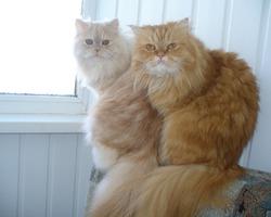 Лера и Саша (из персов)