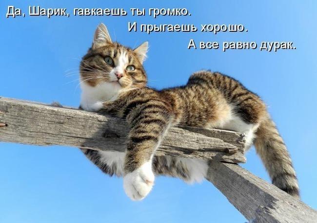 фото 1: Котоматрица (котоюмор!)!