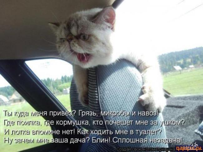 фото 2: Котоматрица (котоюмор!)!