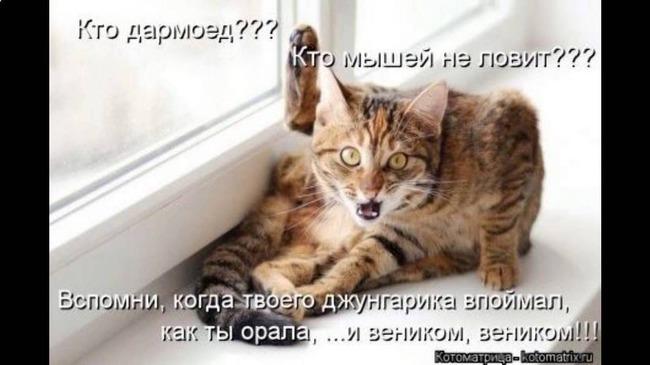 фото 3: Котоматрица (котоюмор!)!
