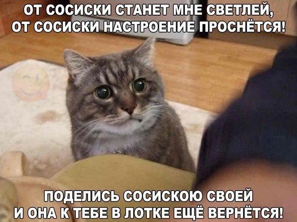 фото 4: Котоматрица (котоюмор!)!