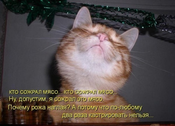 фото 5: Котоматрица (котоюмор!)!