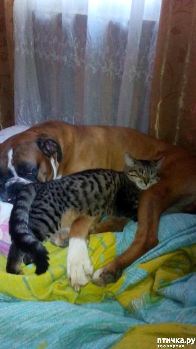 фото 1: Кто сказал, что кошка с собакой не дружат?)